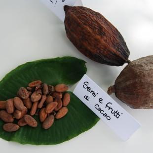 Brera-Cacao